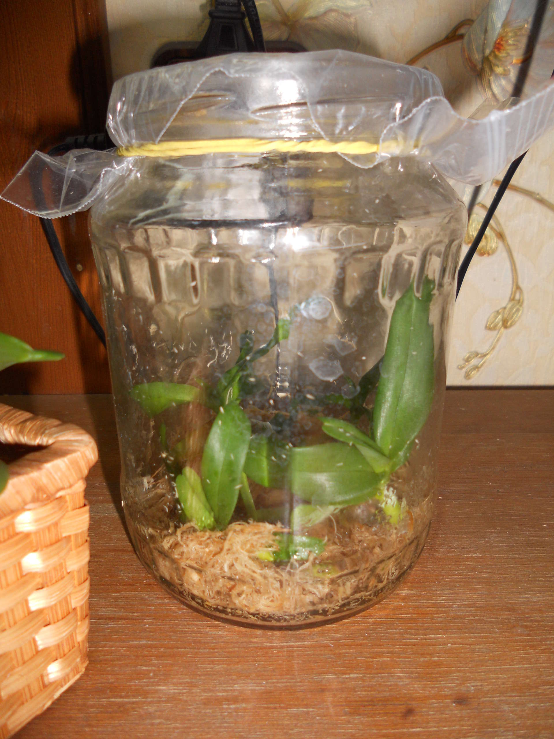 Как садить орхидею в горшке