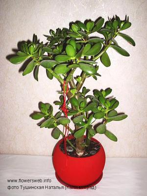 Ползучие растения нужно использовать