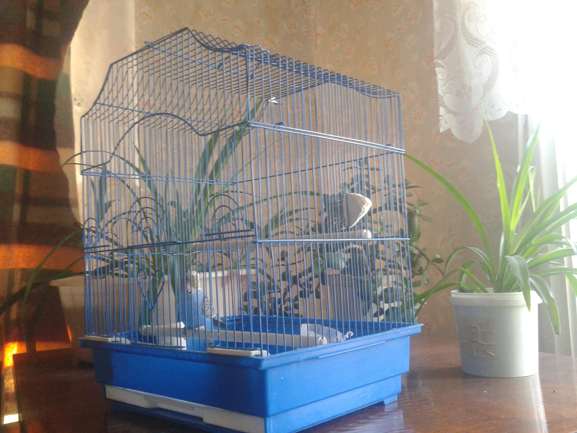 Сонник птиц в клетку сажать 25