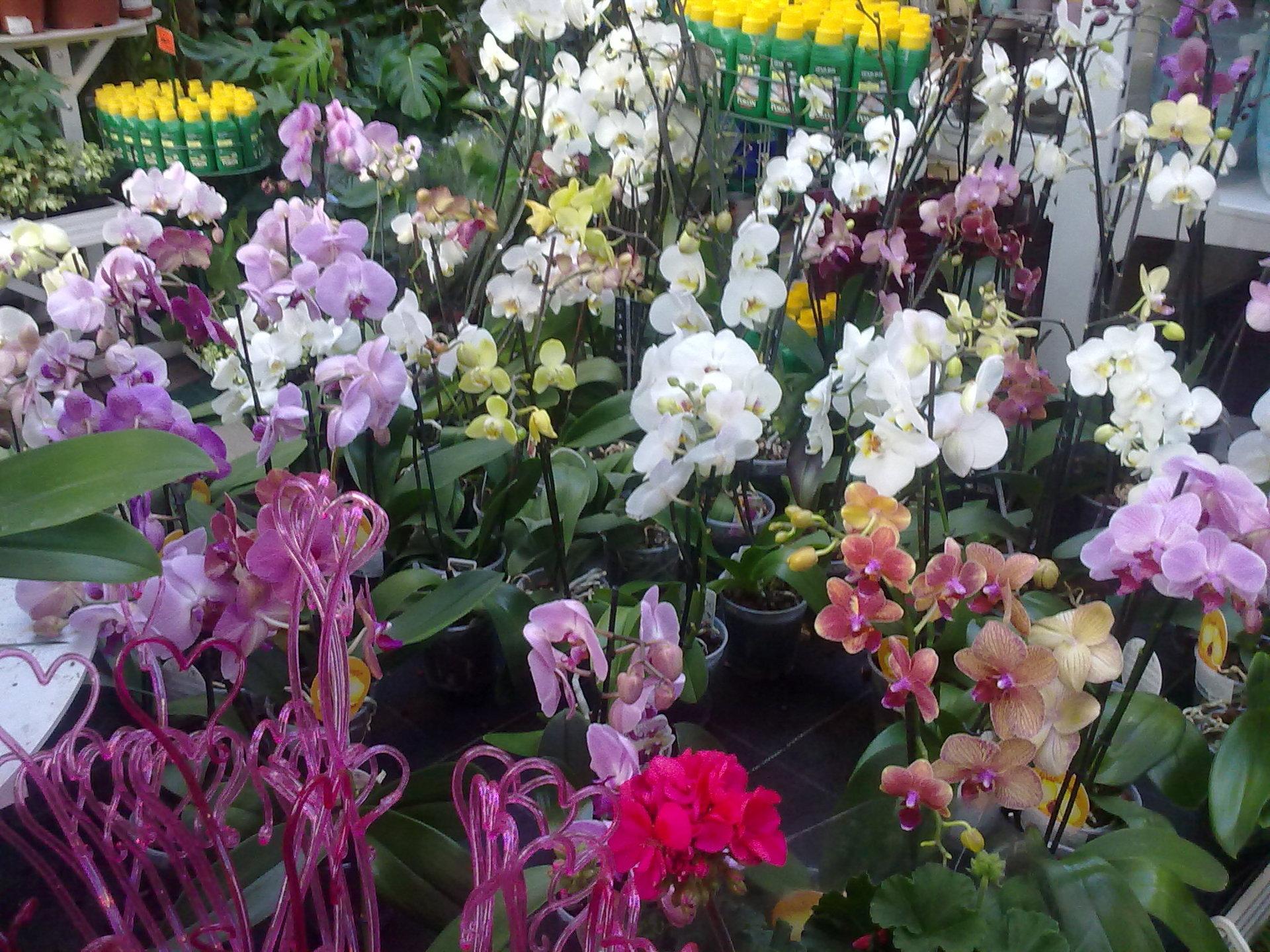 Цветы в брянске фото цена