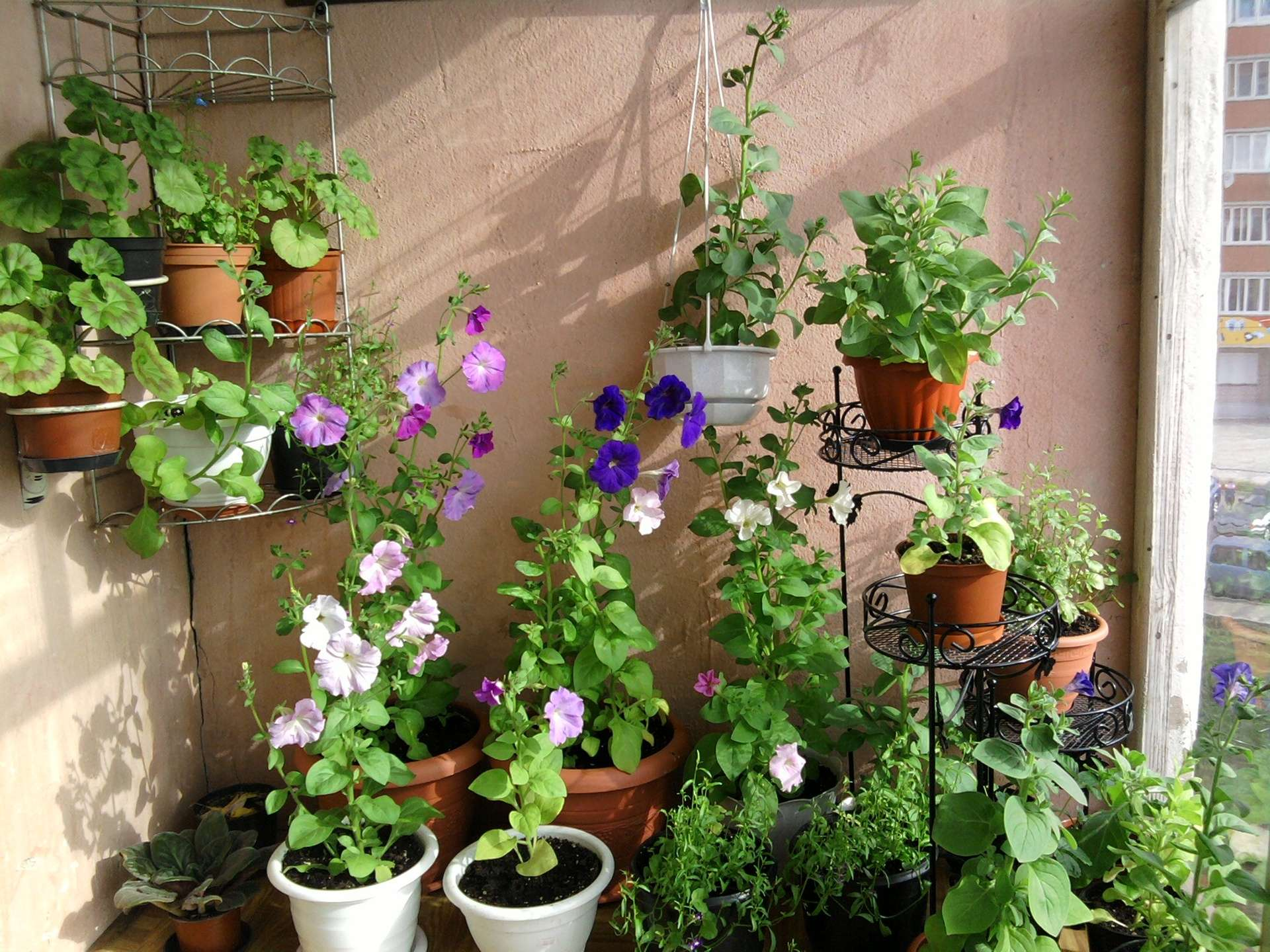Цветы на балконе фото форум