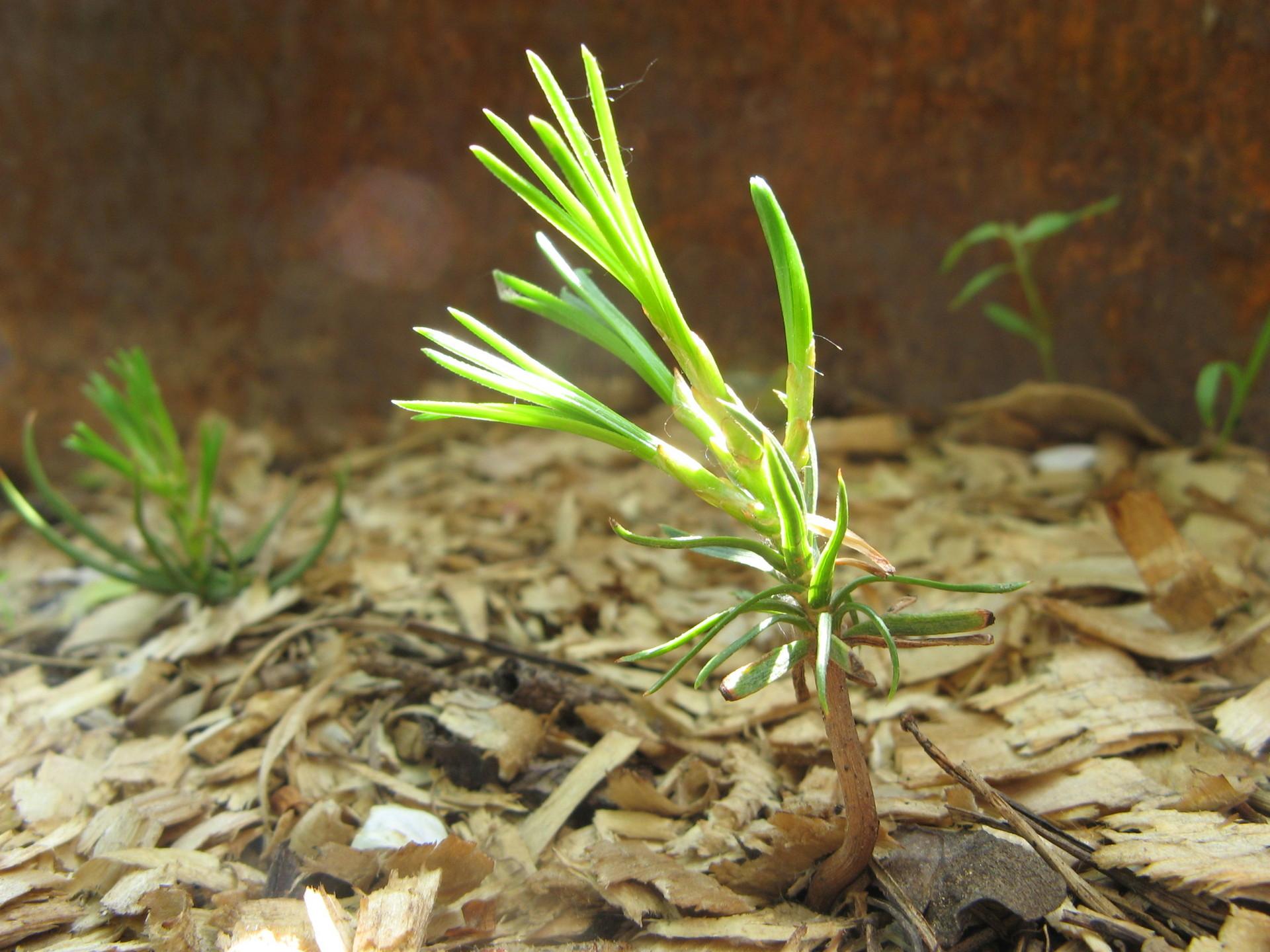 Выращивание 29