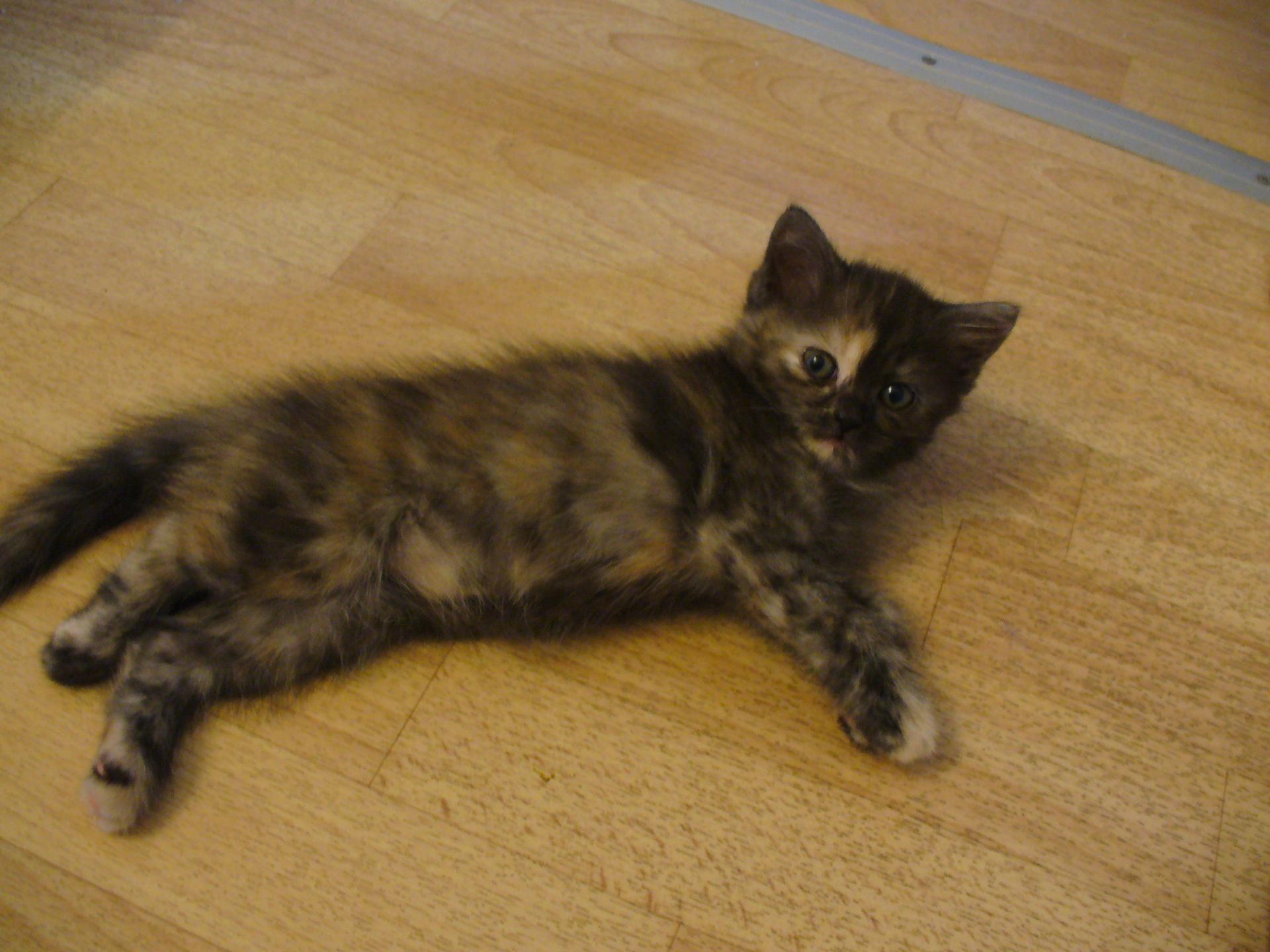 Трехцветная кошка - Кошкин Док