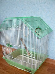 Можно ли сажать двух попугаев в одну клетку 4