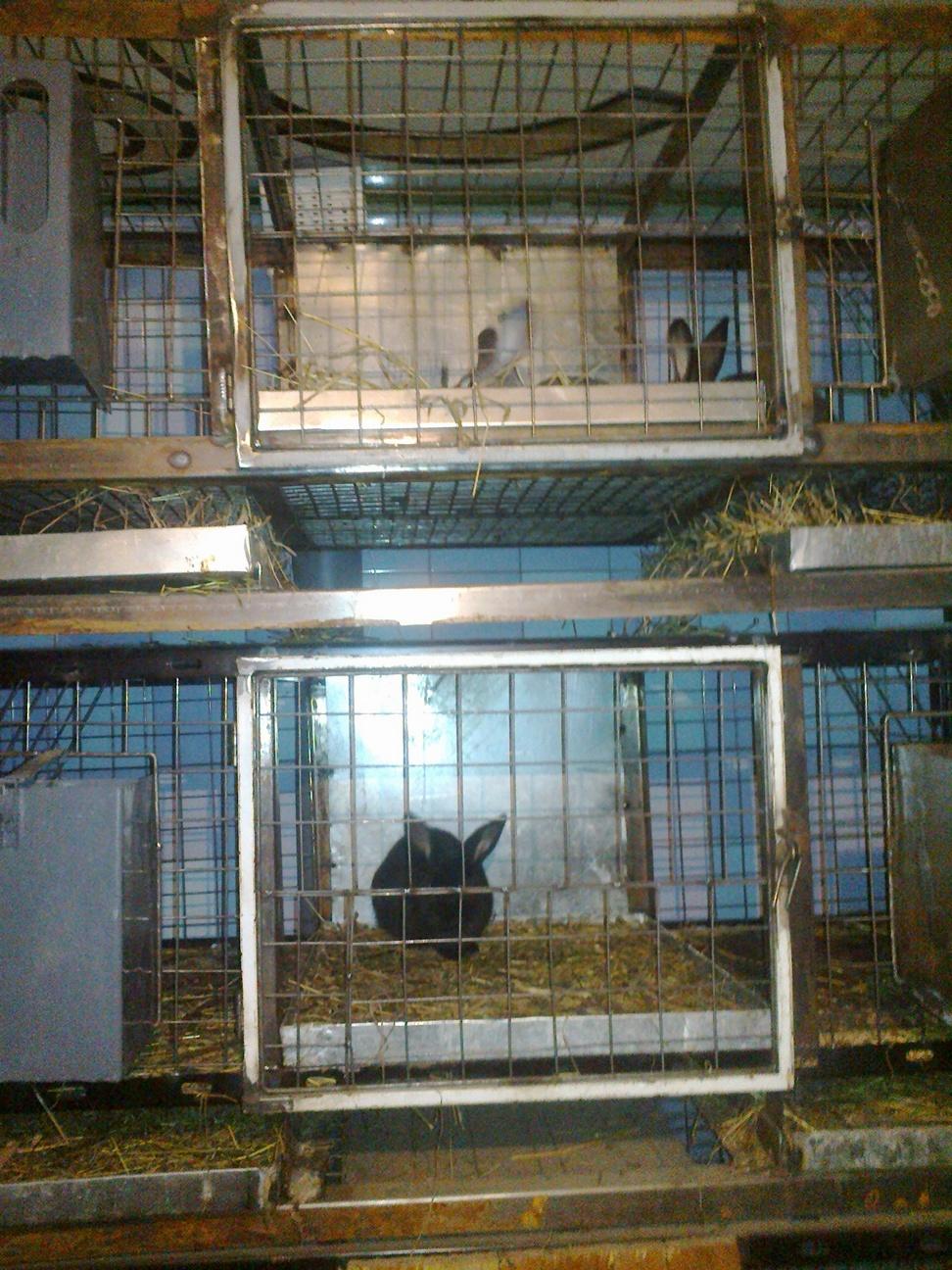 Разведение кроликов в клетке - способы, клетки для кроликов - как 24