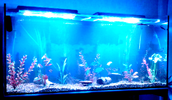 Из светодиодов аквариума своими руками фото