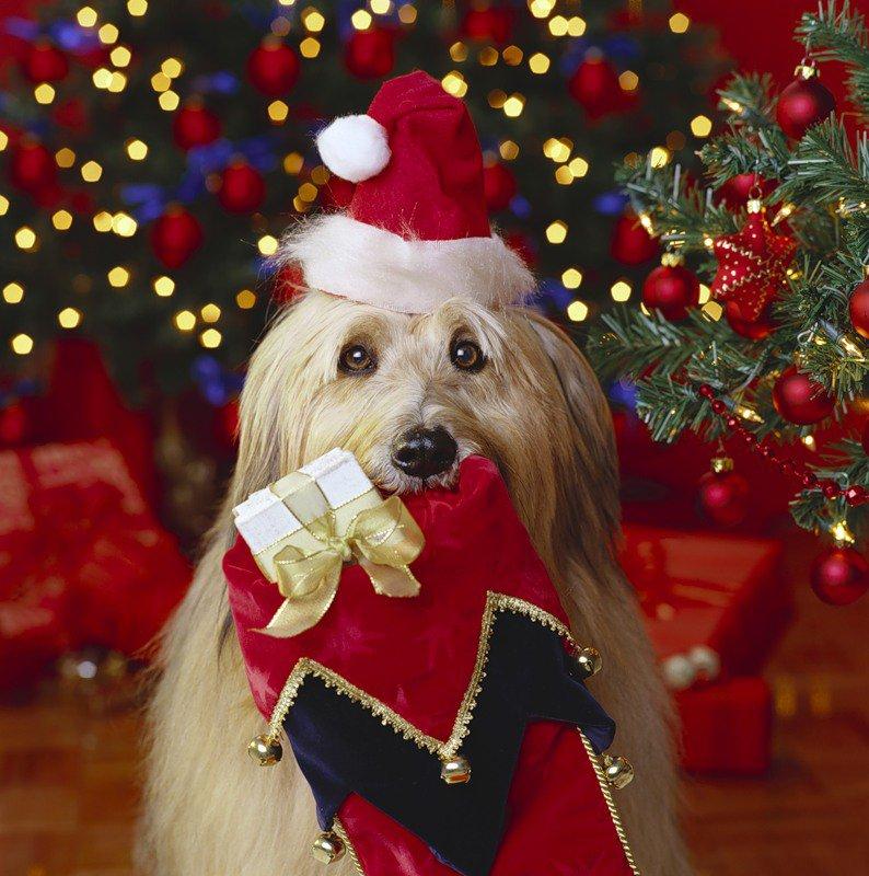 Что подарить собаке на новый год своими