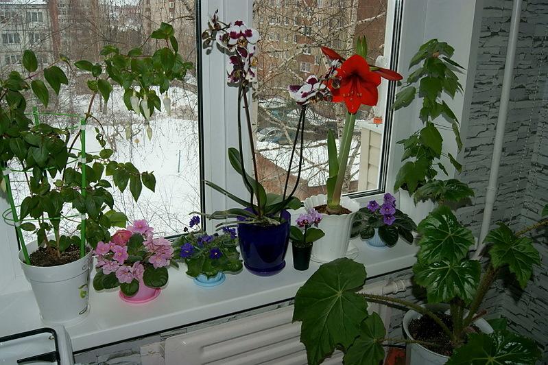Цветы дома не растут фото