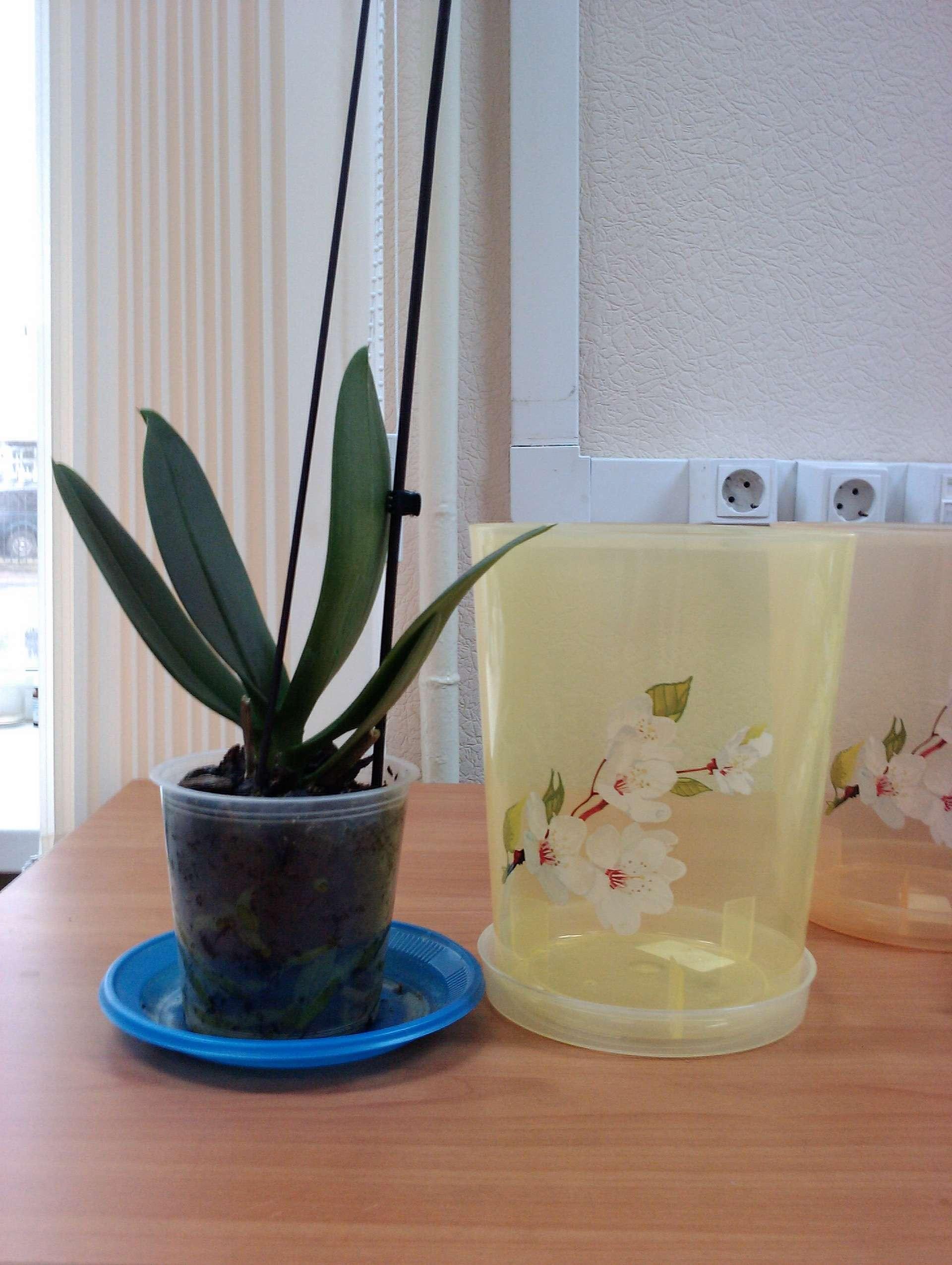 В какой горшок сажать орхидею фото