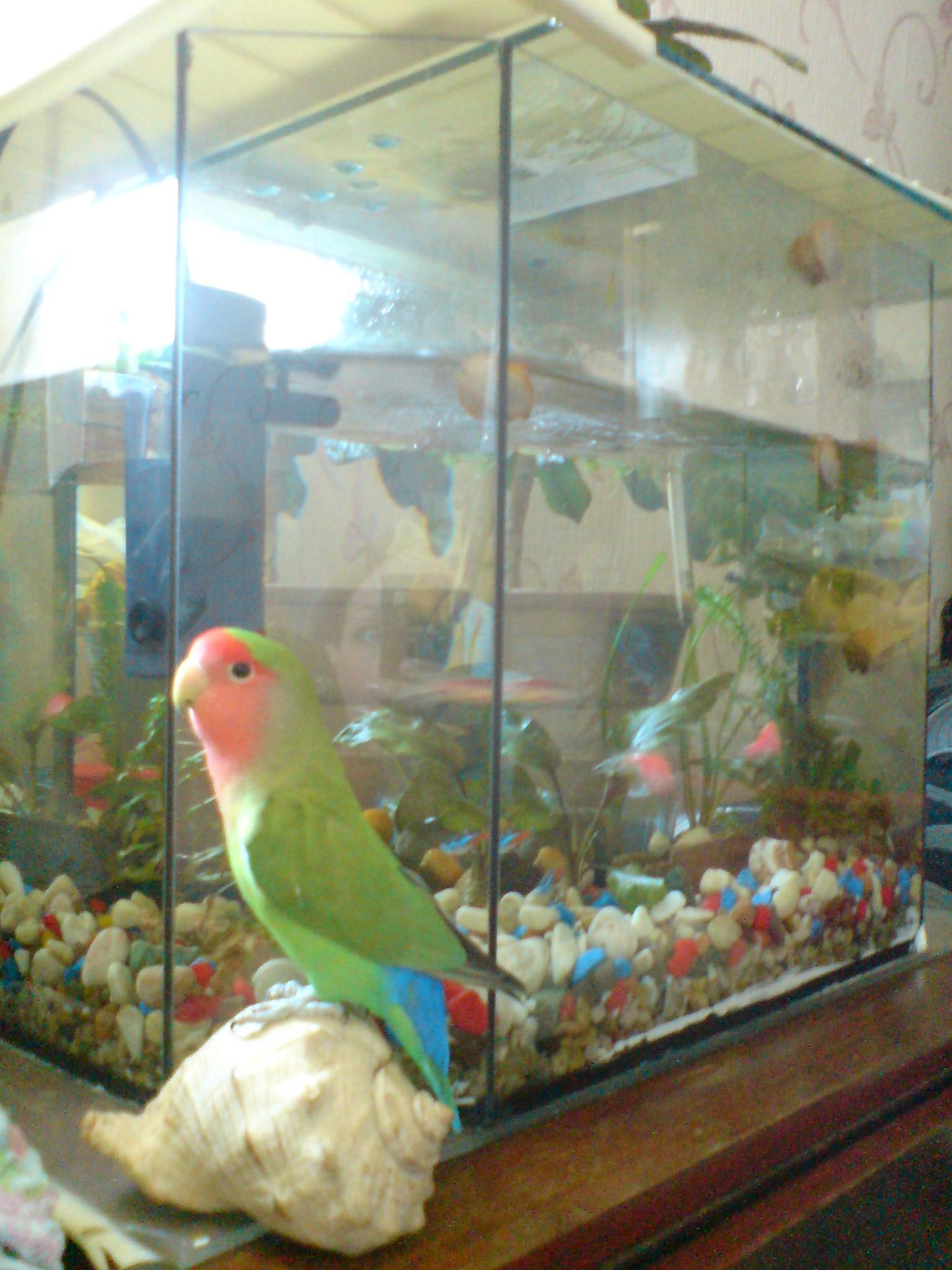 Игрушки для попугаев своими руками