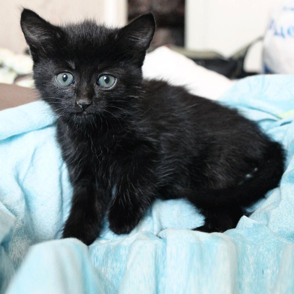 Фото котов черных и серых