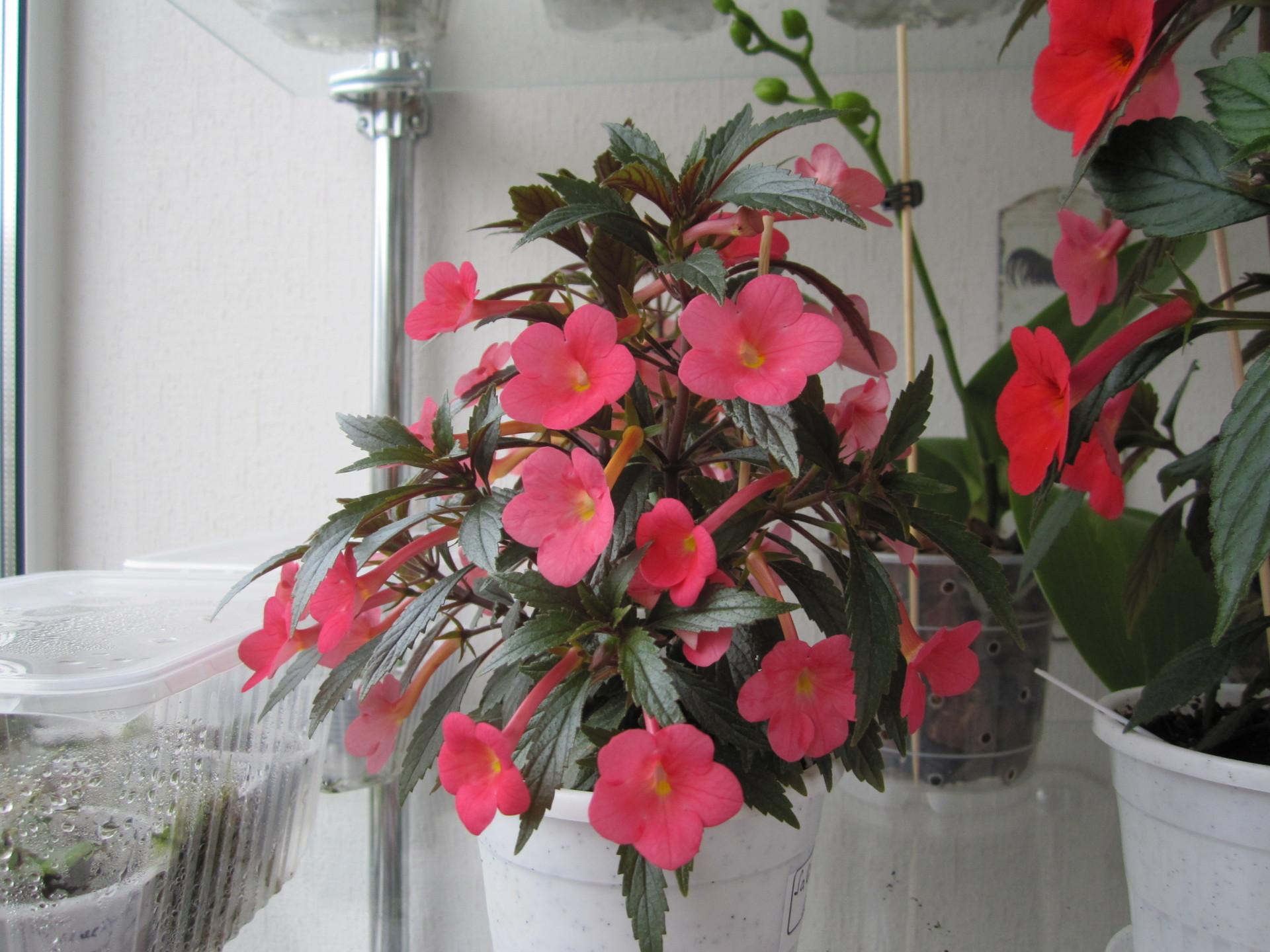 Платья из цветов: ochendaje