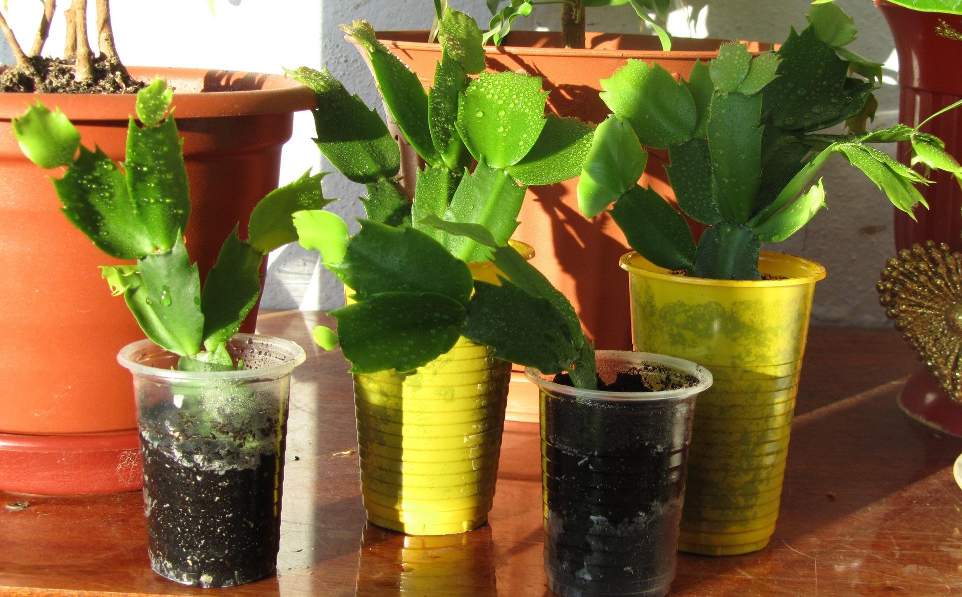 Как размножить цветы в домашних условиях