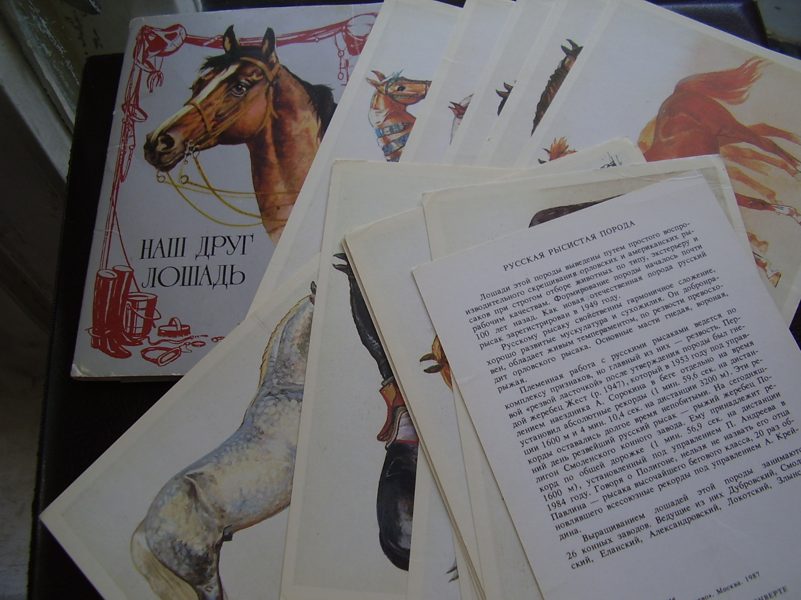 Лошадь наш друг открытки 73