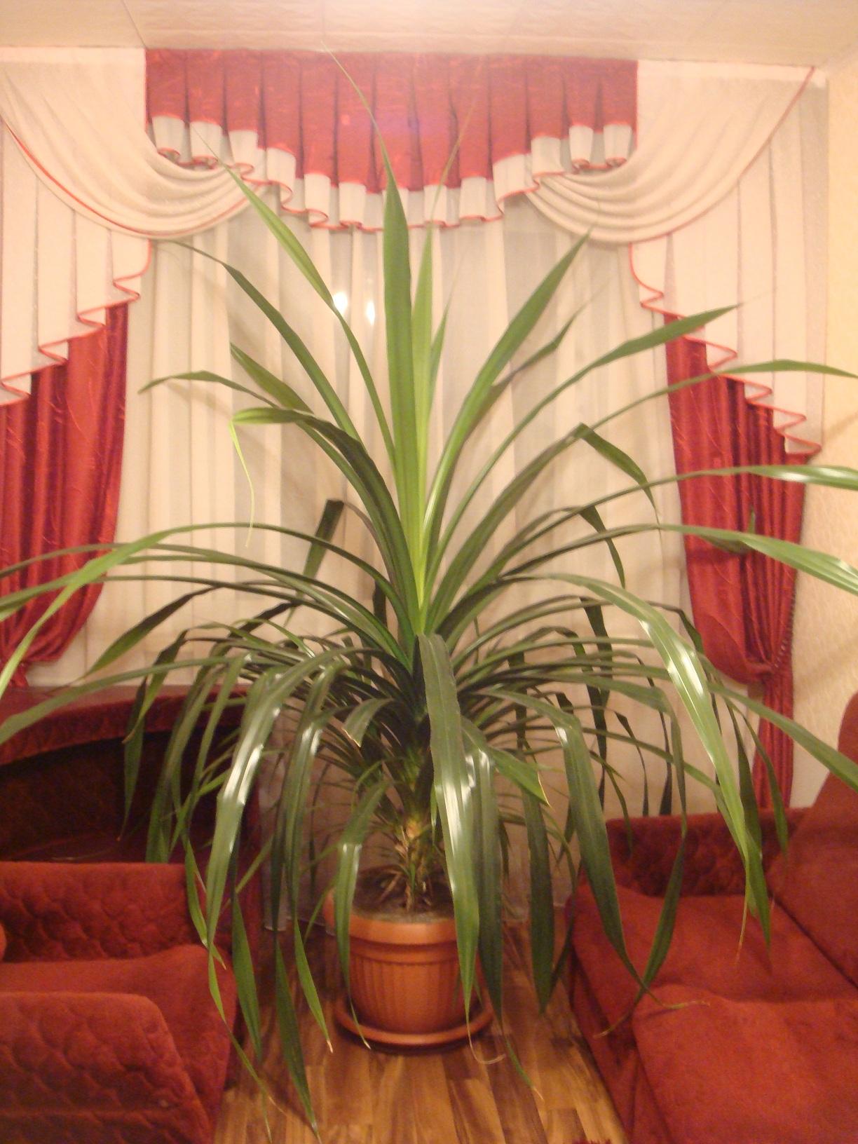 Какие комнатные цветы можно высаживать в открытый грунт