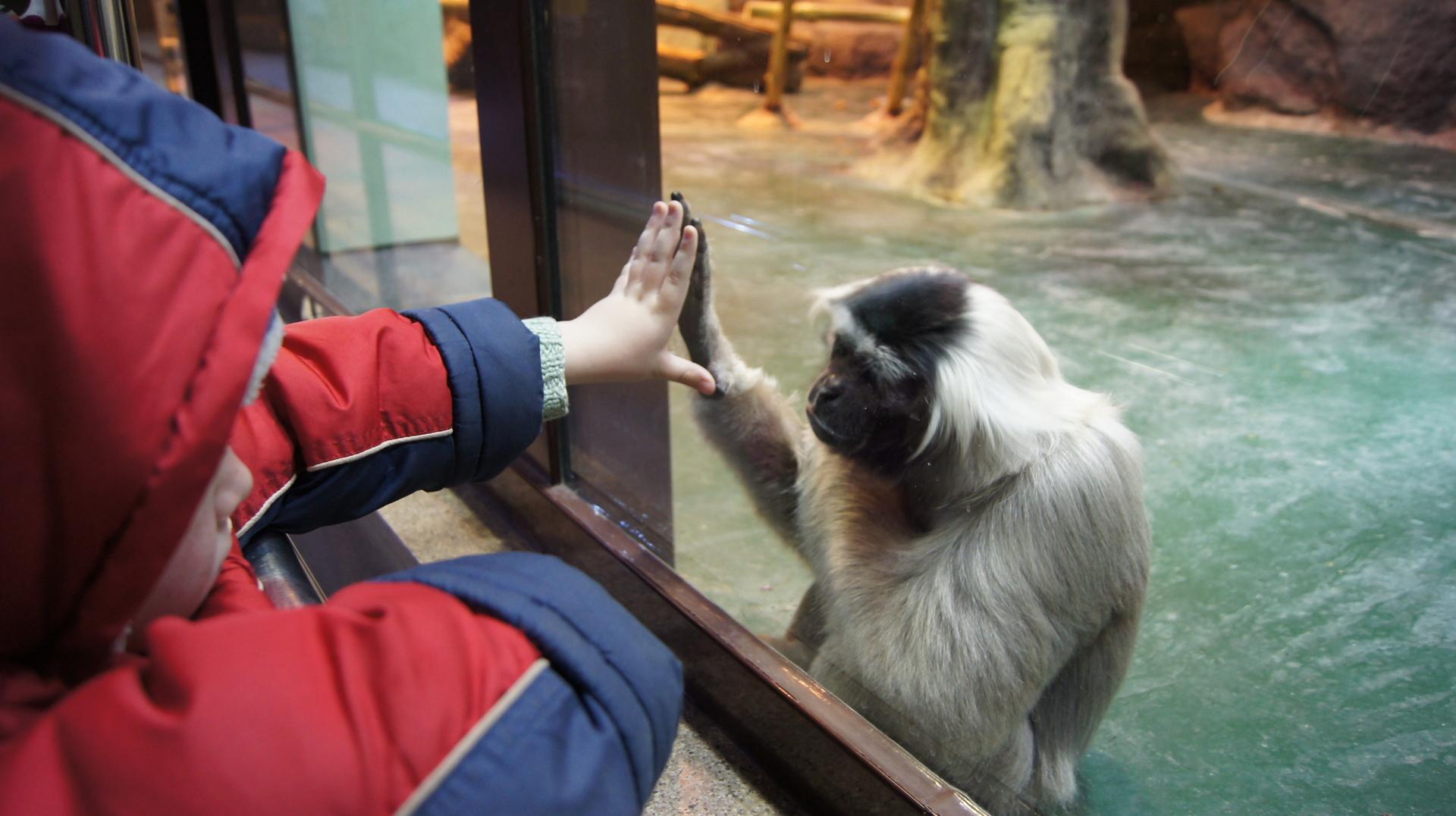 Дети и обезьяны фото