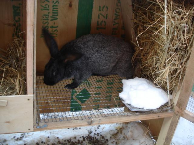Как сделать кормушку кроликам для сена