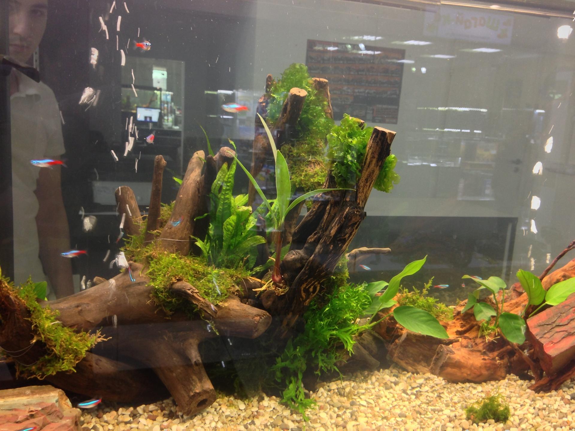 Дизайн аквариума 300 л