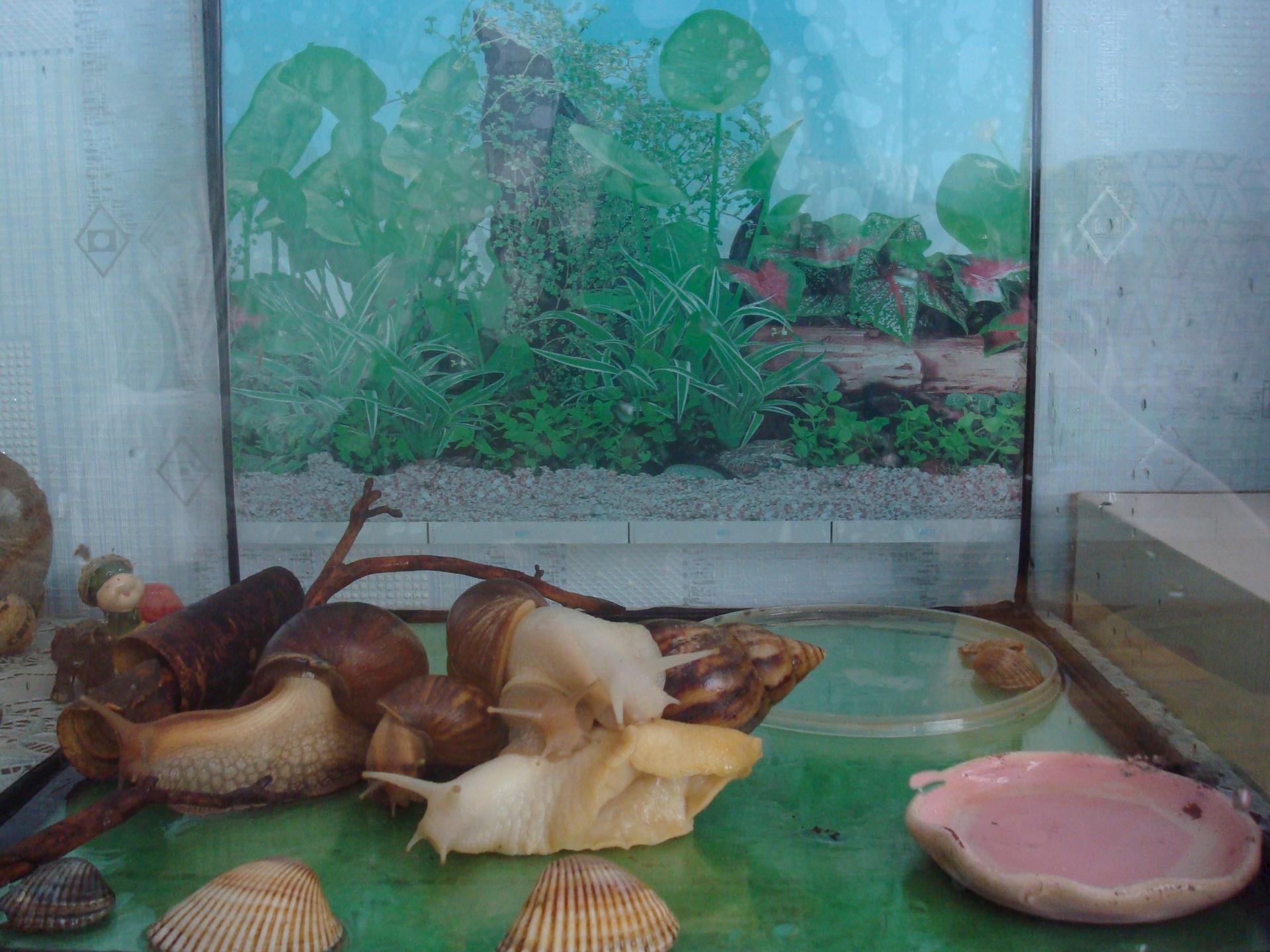 Террариум для ахатин или как обустроить домик для улитки