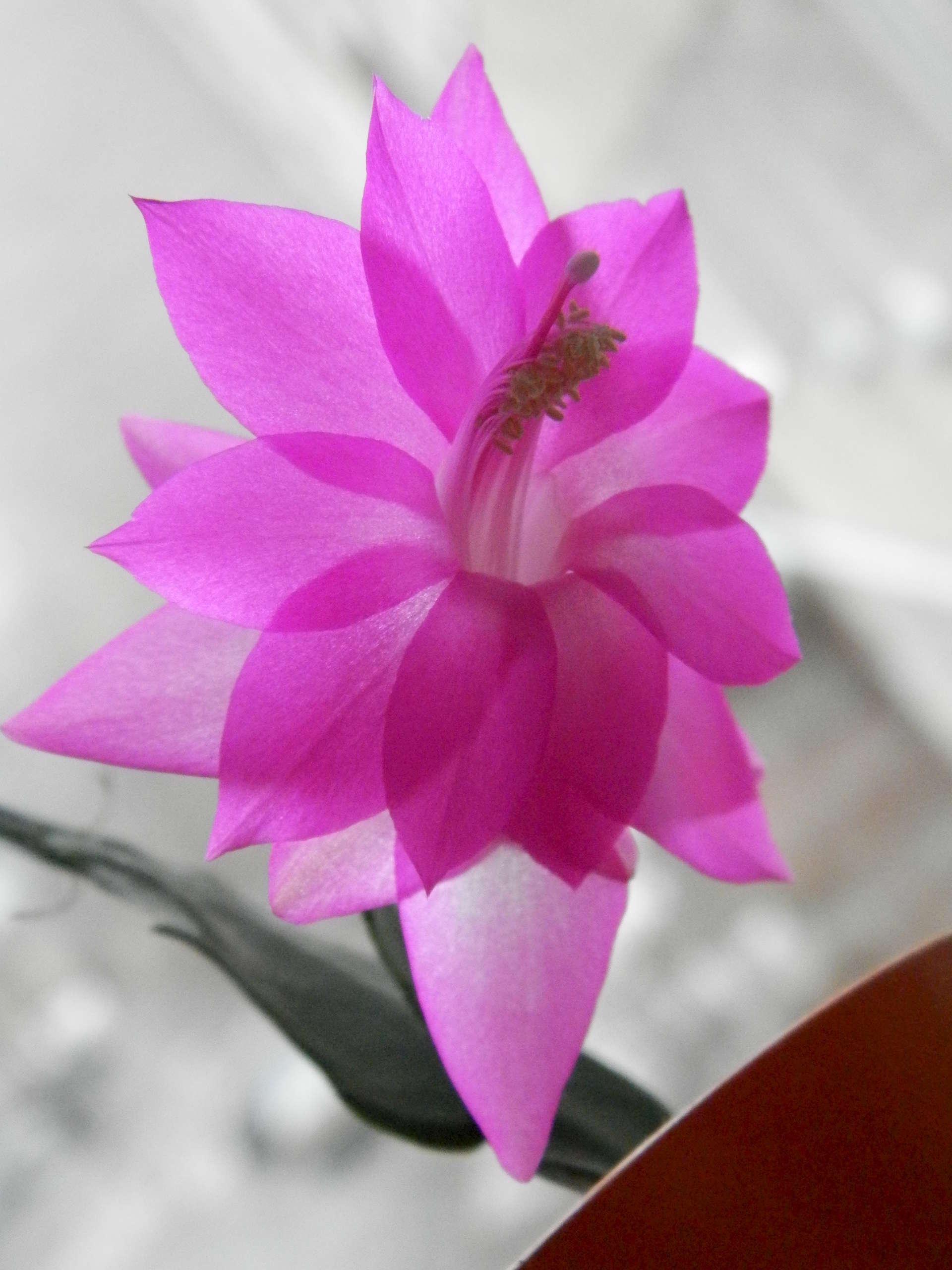 Домашние цветы и названиями по алфавиту