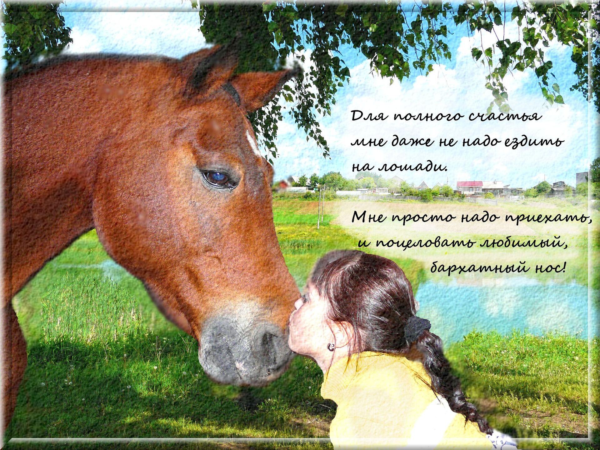 Поздравление с днем рождения коннику