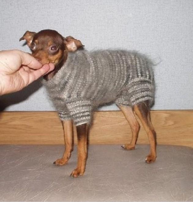 Одежда для собак фото своими руками