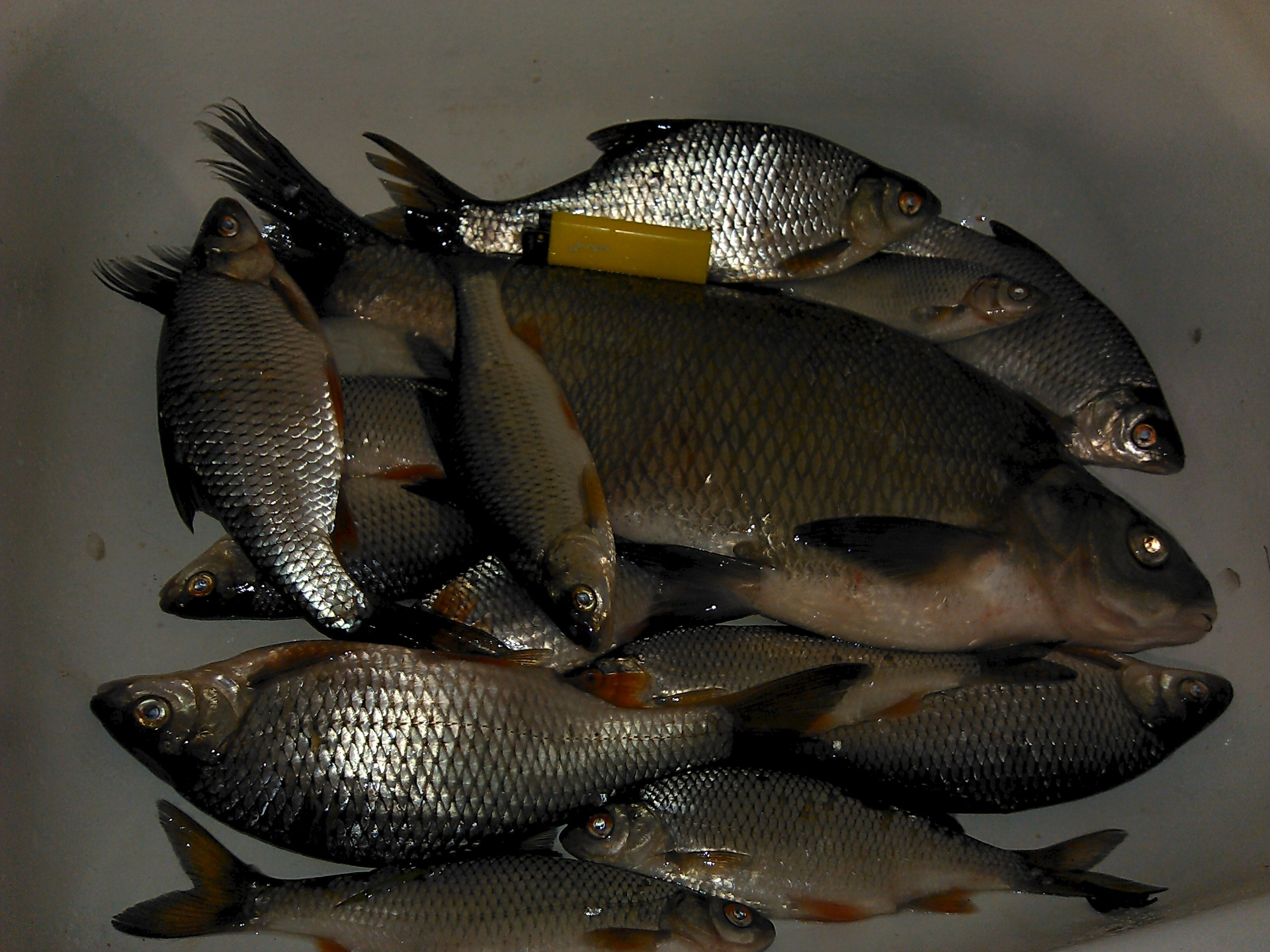 где в татарстане клюет рыба