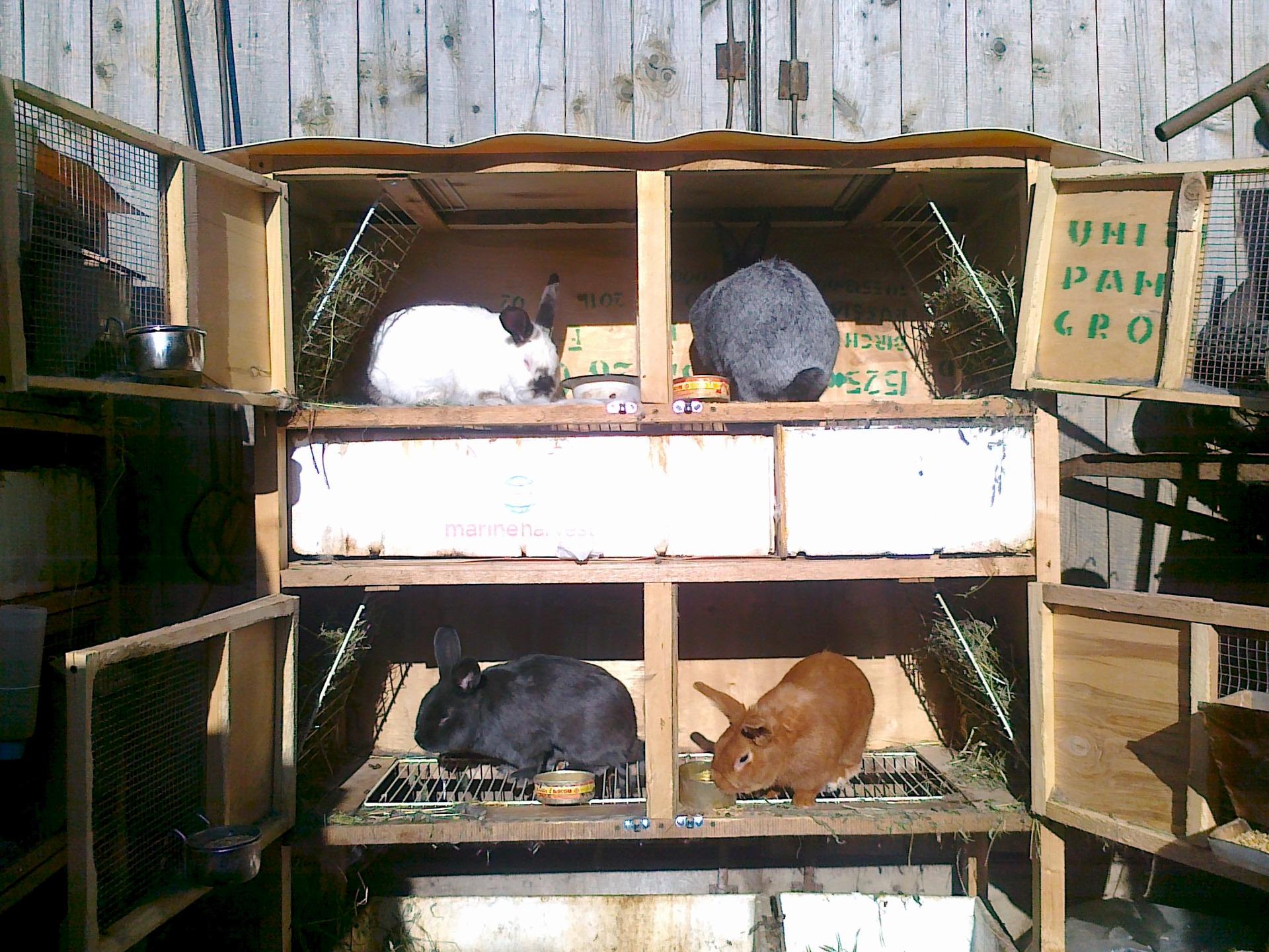 Как сделать клетку для кроликов и их размеры