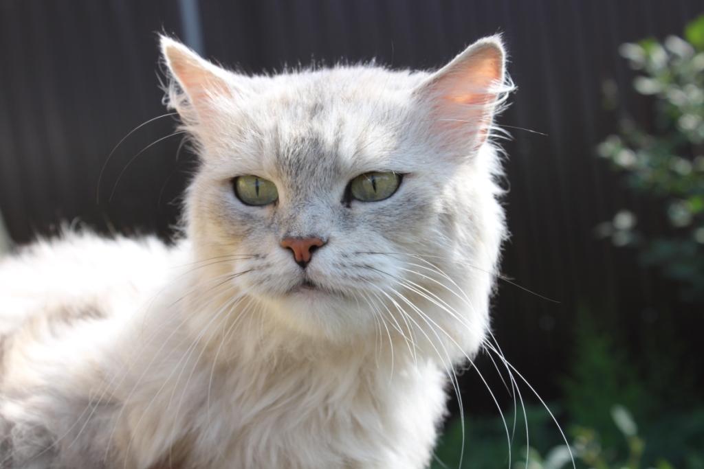 Подарите кошке дом