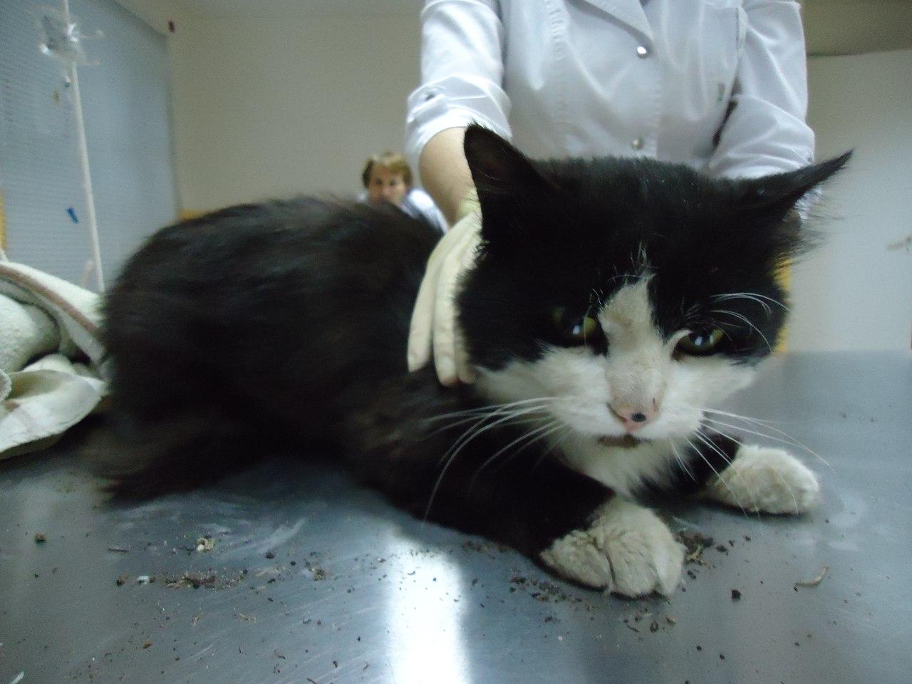 Что дать коту от поноса в домашних 19