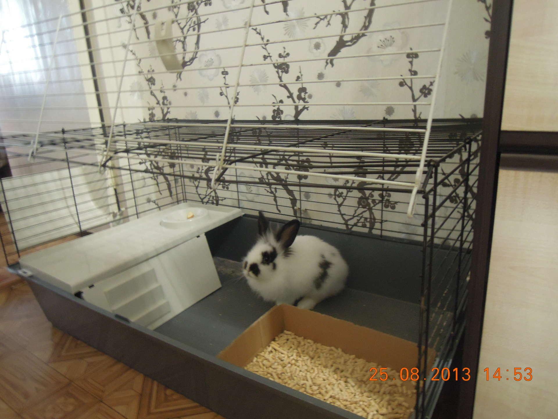 Клетка декоративного кролика своими руками для квартиры фото