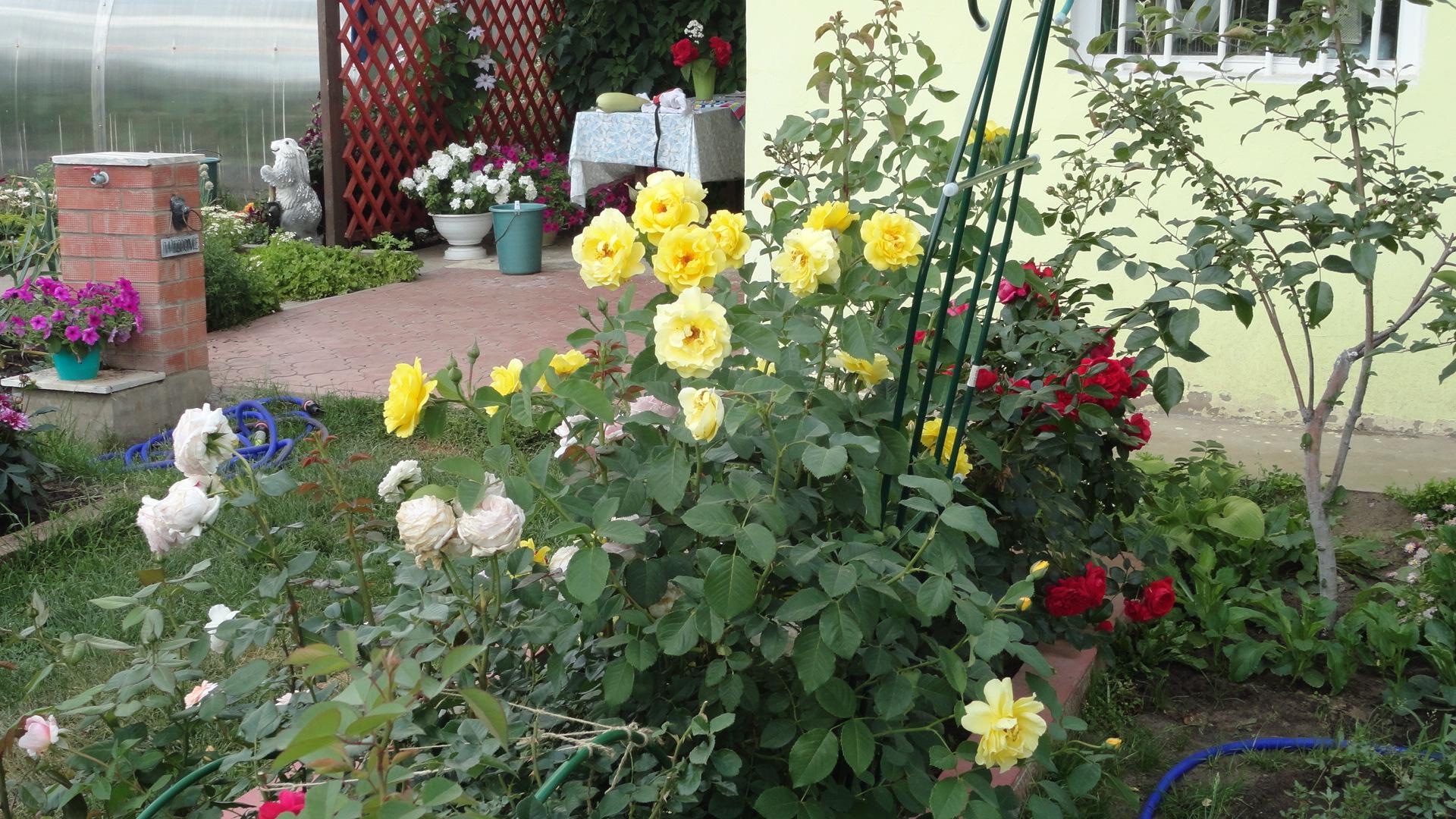 Цветы на даче и огороде фото