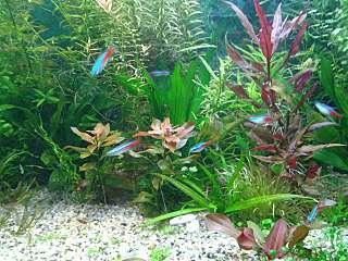 1280 X 960 172.1 Kb Как убрать зелень из аквариума?