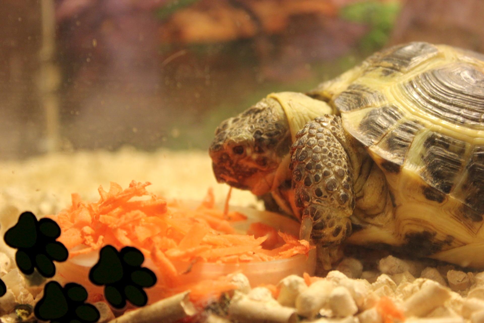 Террариум для черепах сухопутных своими руками