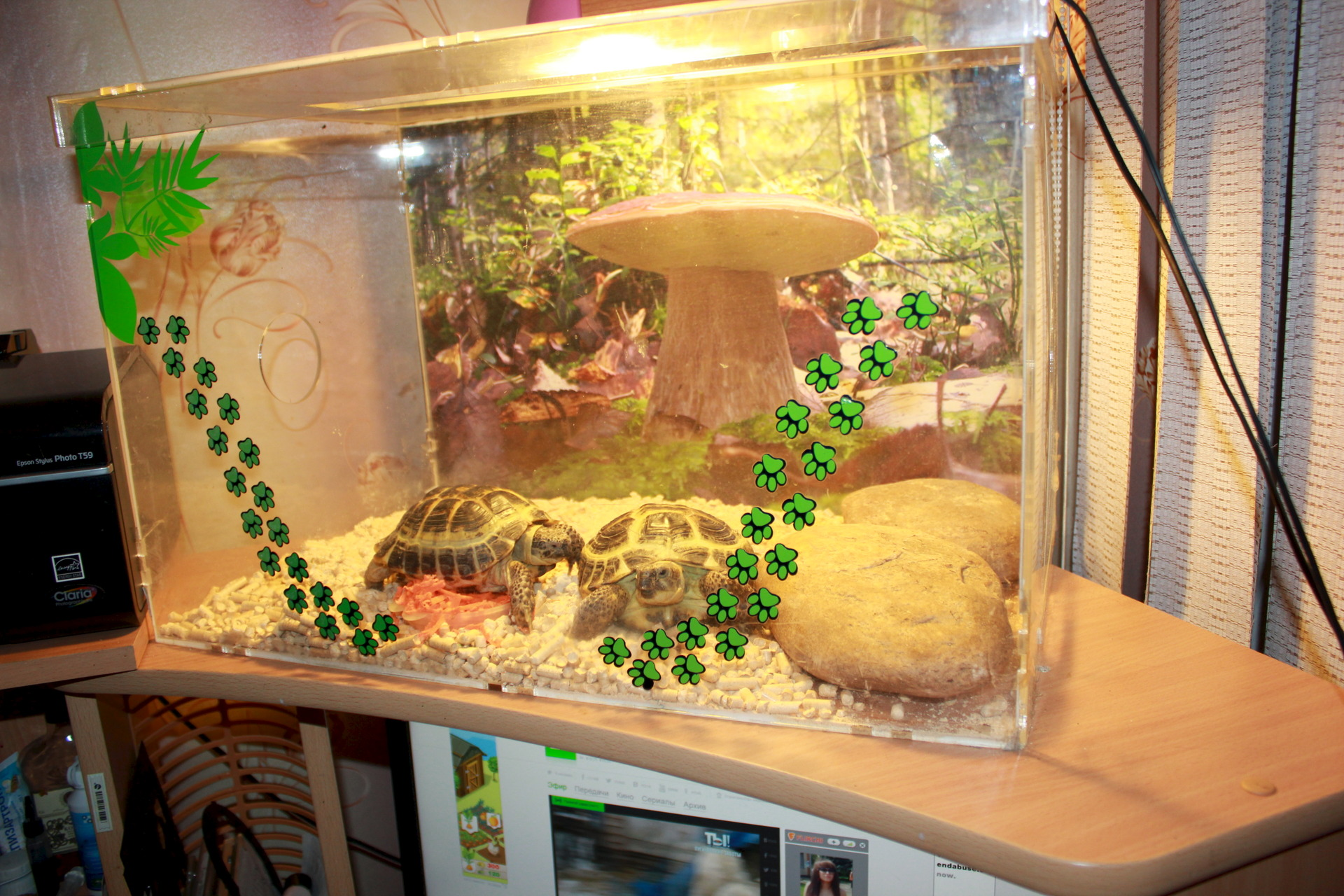 Террариум своими руками для черепахи фото