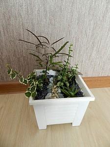 1200 X 1600 506.4 Kb Композиции из растений. (Проба пера)