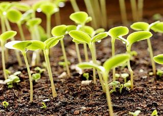 630 X 448 280.8 Kb 800 X 600 119.7 KbПринимаю заказы на выращивание рассады!