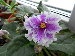 1600 X 1200 301.6 Kb Композиции из растений. (Проба пера)