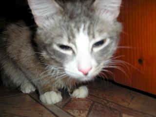 1920 X 1436 497.7 Kb потерялся кот !