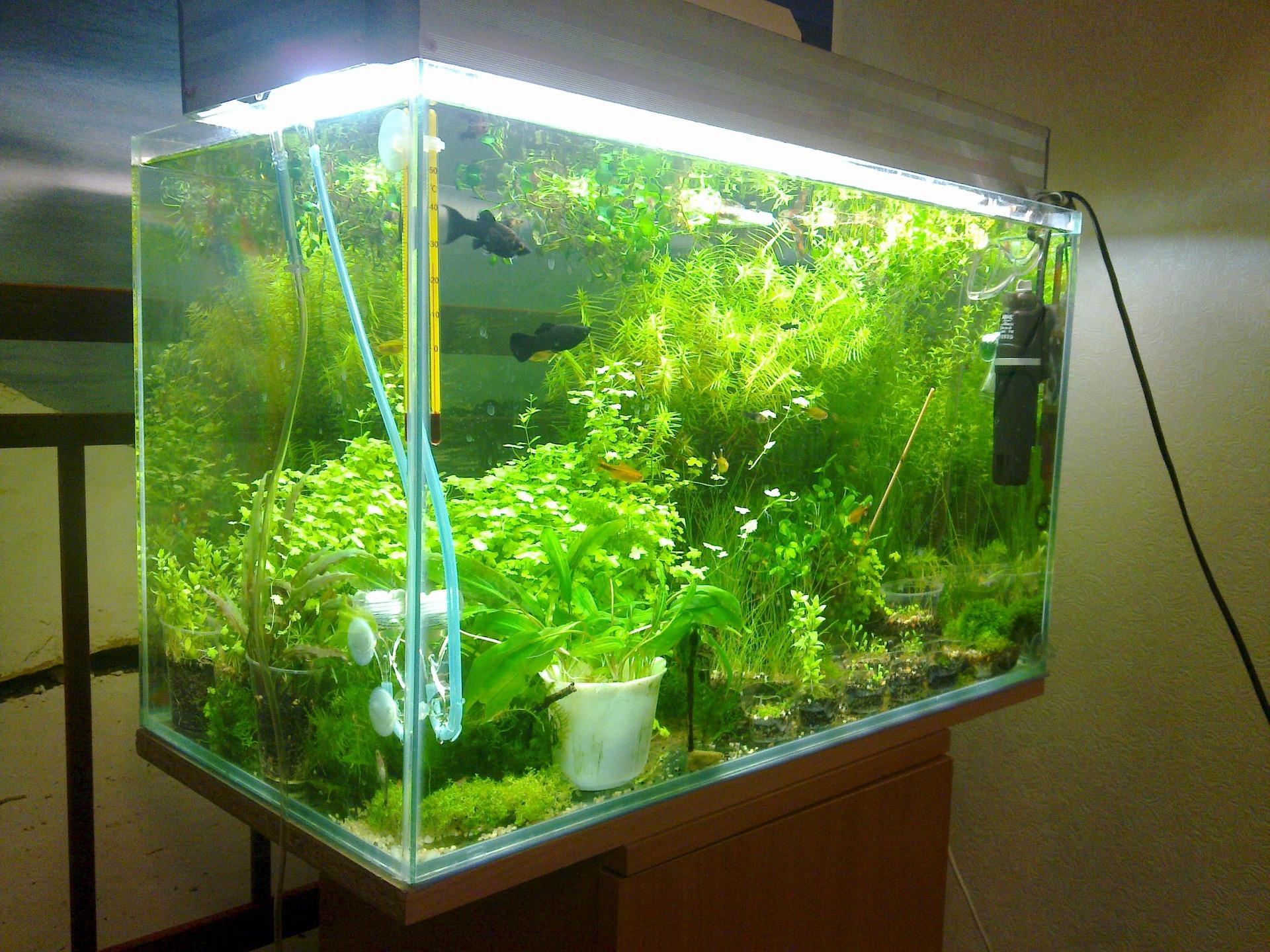 Со2 для аквариумов своими руками