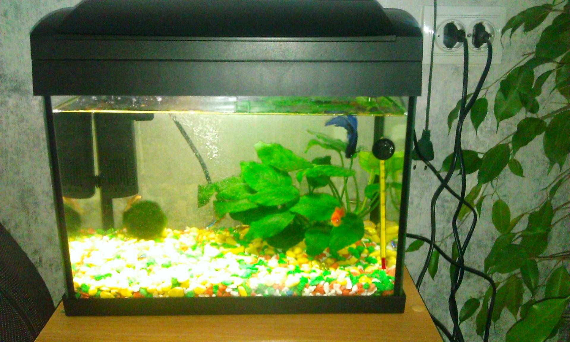 Как смягчить воду в аквариуме 24