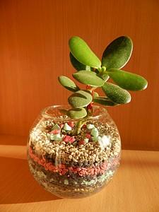 1200 X 1600 414.5 Kb Композиции из растений. (Проба пера)