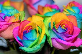 """700 X 466  73.5 Kb подскажите, где продают """"Разноцветные розы""""?"""