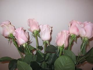 1920 X 1440 486.9 Kb живые светящиеся в темноте цветы к 8 марта
