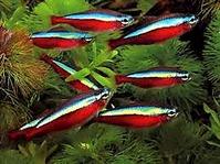 259 X 194 10.8 Kb 274 X 184 13.1 Kb качественный и количественный состав аквариума