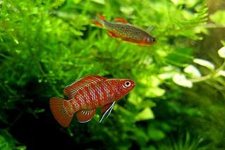 800 X 534 98.7 Kb 640 X 388 18.1 Kb 400 X 300 141.5 Kb качественный и количественный состав аквариума