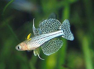 480 X 351 27.8 Kb качественный и количественный состав аквариума