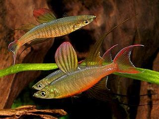 600 X 450 85.9 Kb 480 X 351 27.8 Kb качественный и количественный состав аквариума