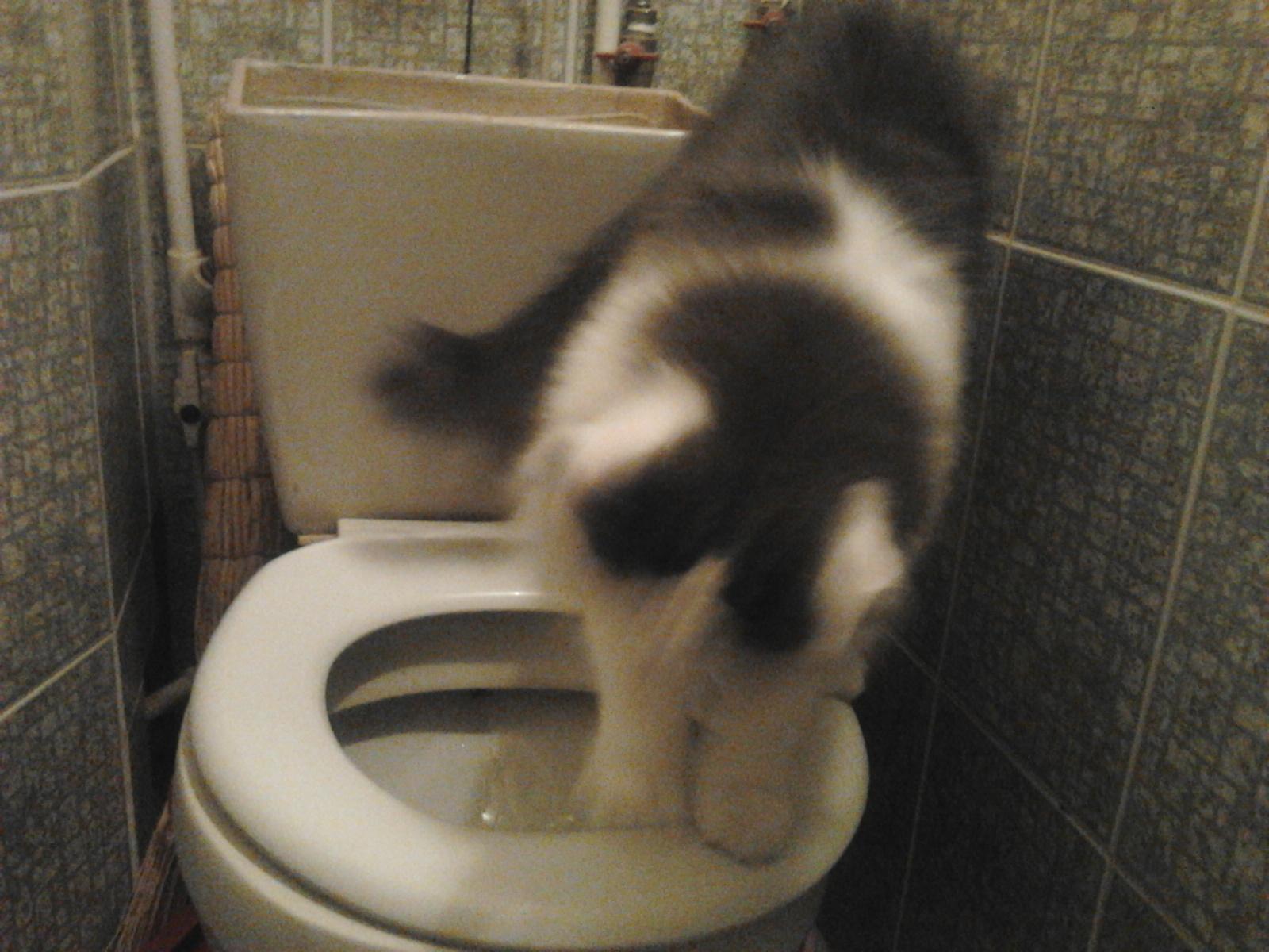 Поссала в туалете 2 фотография