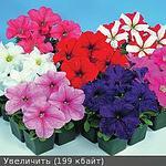 225 X 225 14.0 Kb 225 X 225 11.4 Kb 166 X 164 13.5 Kb продам в хорошие руки рассаду однолетних цветов
